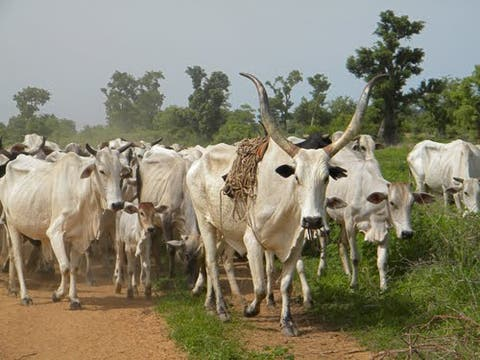You cant's force us to donate land to herdsmen - Governors tells Miyetti Allah