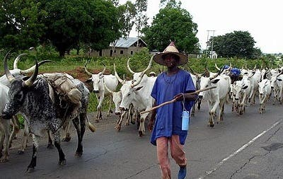"Take Ruga, give us proper and better social amenities - Nigerians ""drag"" Buhari"